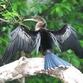 Costa Rica Turismo | Fauna de Costa Rica