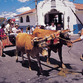 Costa Rica Turismo | Boyeo y carreta