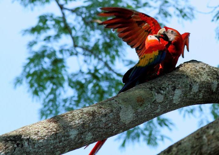 Costa Rica Turismo | Guacamayas