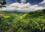 Circuito Costa Rica | Selva de Costa Rica