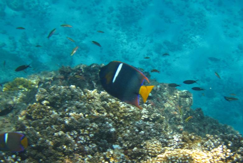 Costa Rica Turismo | Vida acuática