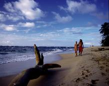 Viajes a Costa Rica | Playa paradisíaca